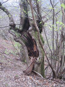 arbre-creux.jpg